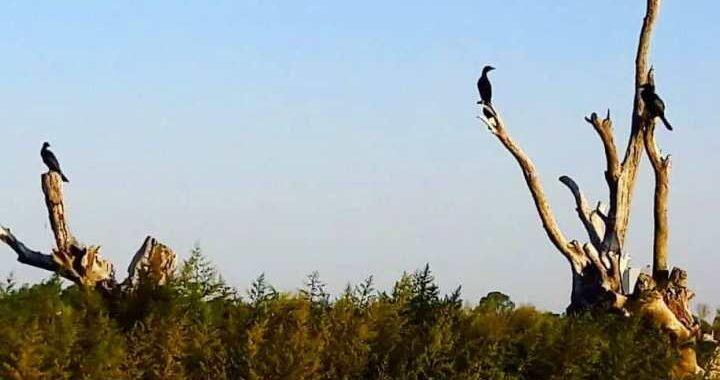 La desolada isla de los cuervos de mar en la Laguna Don Tomás