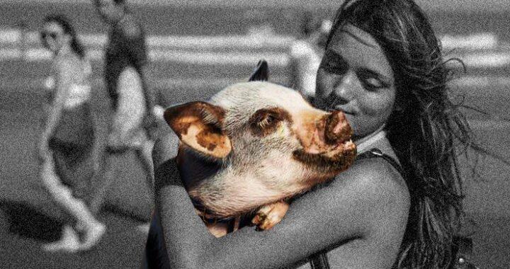 Un cerdo-mascota pampeano es furor en la costa y despierta interés en que se empiecen a adoptar como perros y gatos