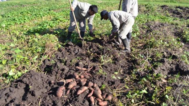 El Banco Nación destinará $10 millones en créditos a pequeños productores agropecuarios