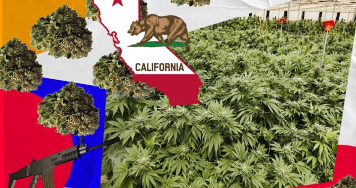De La Pampa a California: la experiencia de una pareja que estuvo 3 meses en una plantación ilegal de marihuana en Estados Unidos