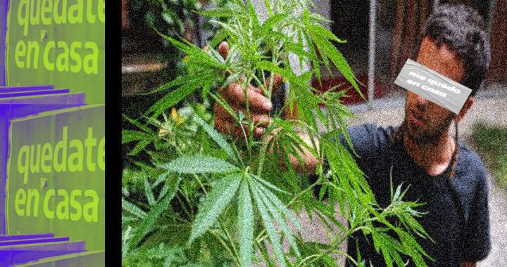 Marihuana y cuarentena: cada vez más pampeanos cultivan aislados en sus casas para escapar del aburrimiento